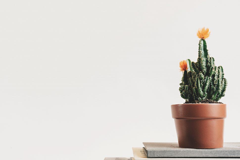 Book Botanical Cactus 403571