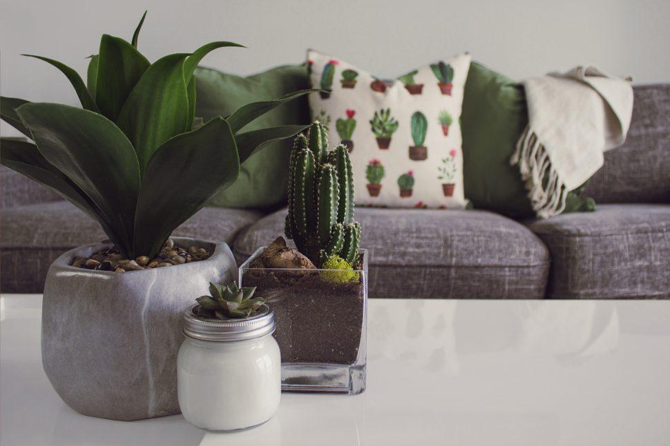 Cactus Cactus Plant Contemporary 1005058